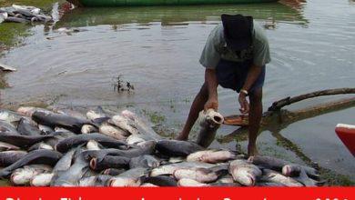 Photo of District Fishermen Association Recruitment 2021 | Social worker Posts | Apply Online