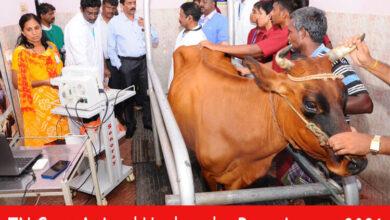 Photo of TN Govt Animal Husbandry Recruitment 2021 | Various Animal Husbandry Worker Posts | Apply Online